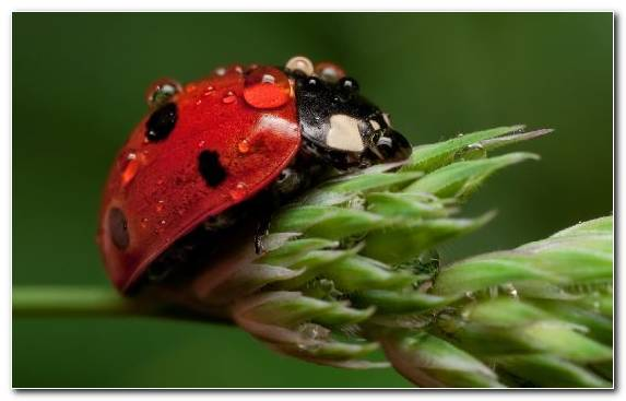 Image Leaf Beetle Macro Photography True Bugs Insect Arthropod