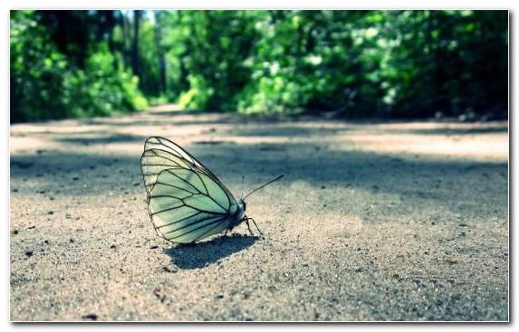 Image Leaf Invertebrate Pollinator Moths And Butterflies Facebook