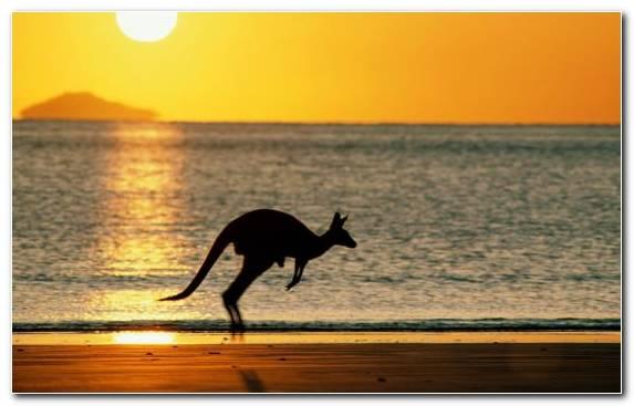 Image Learning Tranquillity Wildlife Sydney Hotel