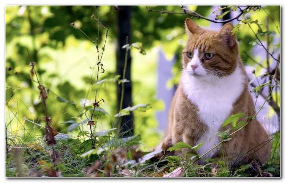 Image Leaves Fauna Summer Tabby Cat Flora
