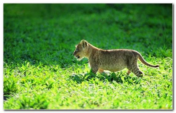 Image Leopard Grassland Bear Terrestrial Animal Nature Reserve