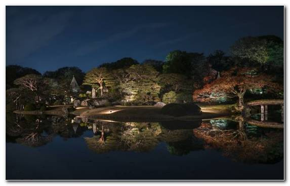 Image Lighting Water Landscape Lighting Japan Tree