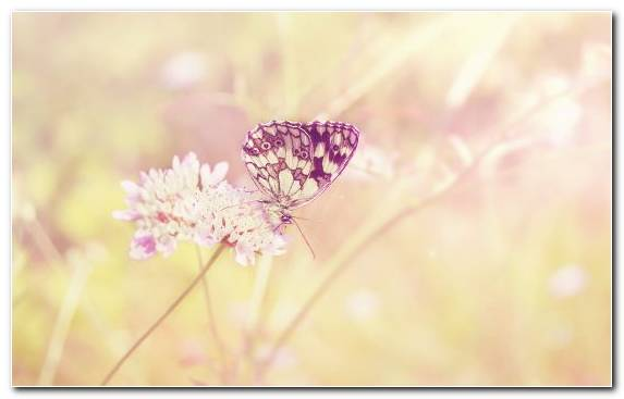 Image lilac butterfly pink pinkie spring