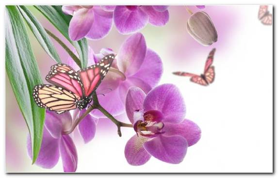 Image Lilac Petal Flower Butterfly Illustration