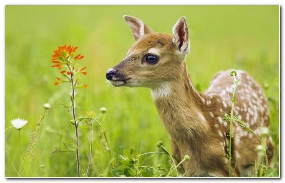 Image Lion Grass White Tailed Deer Puppy Deer