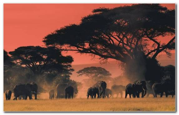 Image Lion Wildlife Maasai Mara Elephant Sunrise