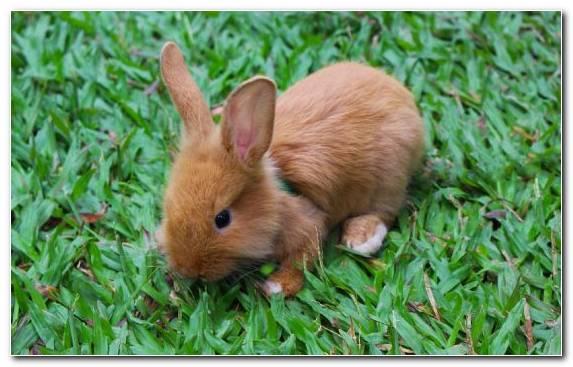 Image Lionhead Rabbit Grasses Infant Grass Cuteness