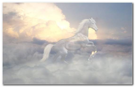 Image livestock horses cloud stallion sky