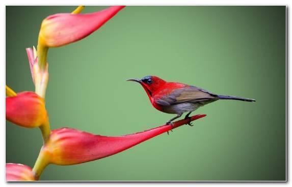Image Lovebird Twig Flower Flora Beak