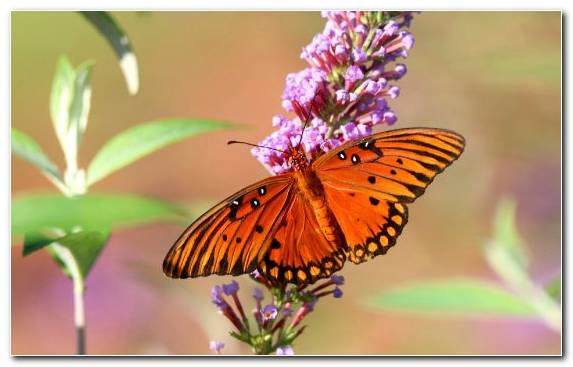 Image Lycaenid Insect Invertebrate Macro Brush Footed Butterfly