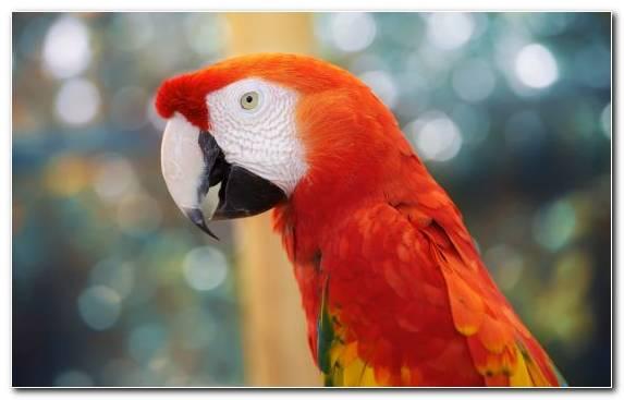 Image Macaw Beak Vertebrate Parakeet Parrot
