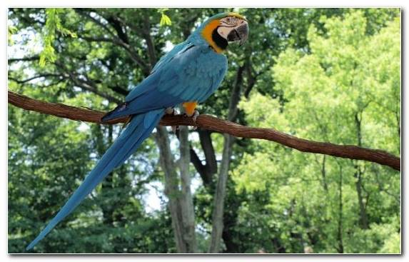 Image Macaw Hyacinth Macaw Fauna Beak Parrot