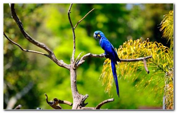 Image Macaw Parrot Beak Branch Bird