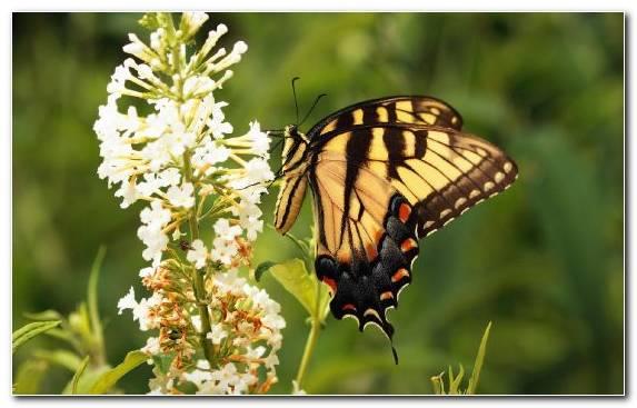 Image Macro Lycaenid Wildlife Pollinator Nectar