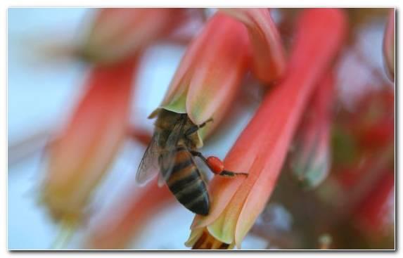 Image Macro Photography Beehive Insect Bee Pollen Pollinator