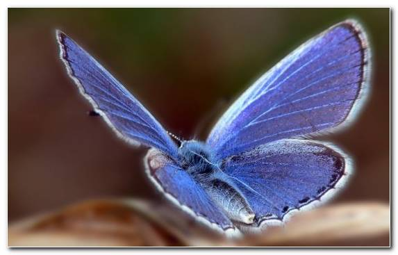 Image Macro Photography Brush Footed Butterfly Lycaenid Pollinator Moths And Butterflies