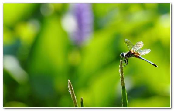 Image Macro Photography Dragonflies And Damseflies Plant Stem Vegetation Damselfly
