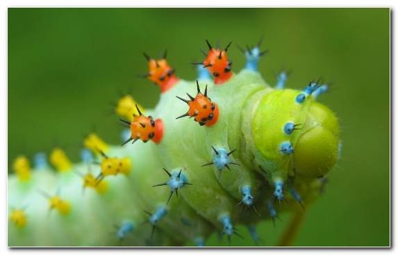 Image Macro Photography Invertebrates Caterpillar Larva Colorful Animals