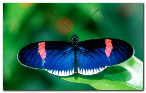 Image Macro Photography Lycaenid Arthropod Brush Footed Butterfly Moths And Butterflies