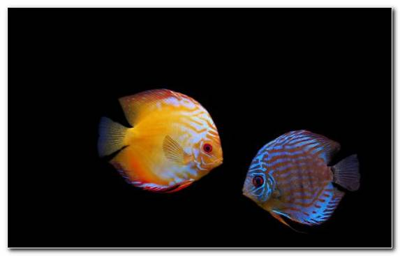 Image Macro Photography Marine Biology Coral Reef Fish Orange Aquarium