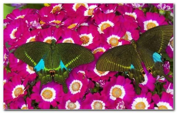 Image Magenta Flowering Plant Invertebrate Annual Plant Pollinator
