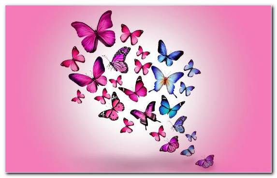 Image Magenta Pollinator Petal Moths And Butterflies Pink