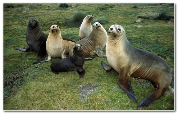 Image Mammal Harbor Seal Earless Seal Sea Lion Animal