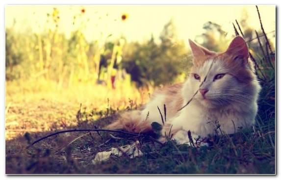 Image Mammal Kitten Sunlight Morning Wildlife
