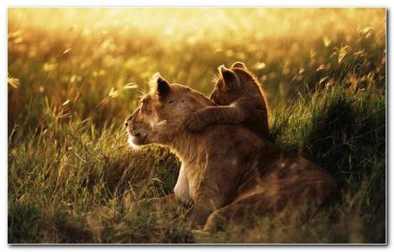 Image Mammal Tarangire National Park National Park Maasai Mara Lake Manyara