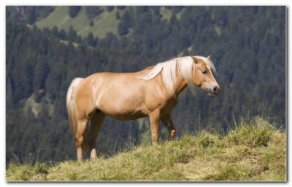 Image Mane Ecosystem Video Stallion Fauna