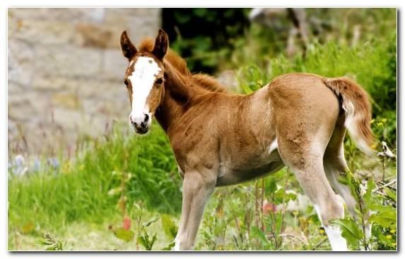 Image Mane Foal Colt Terrestrial Animal Wildlife