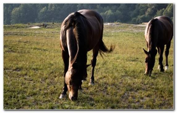 Image mane grassland mare grazing grasses