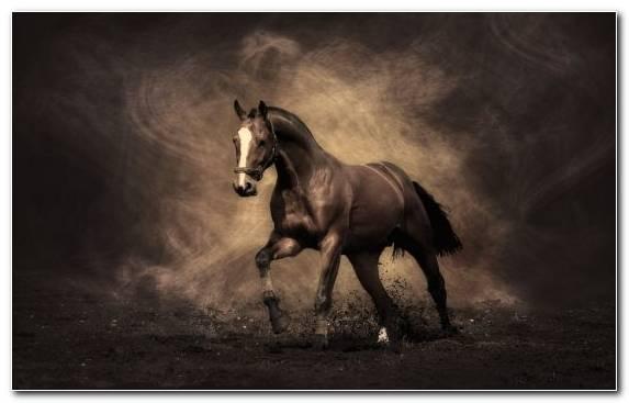 Image mane mustang horse arabian horse fauna horse