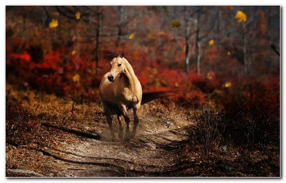 Image Mane Mustang Horse Wildlife Tree Grasses