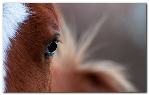 Image Mane Nose Background Light Equine Vision Horse Hound