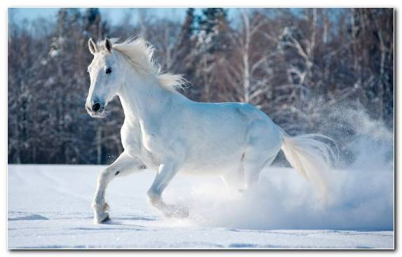 Image Mane Pony Freezing Animal Mustang Horse