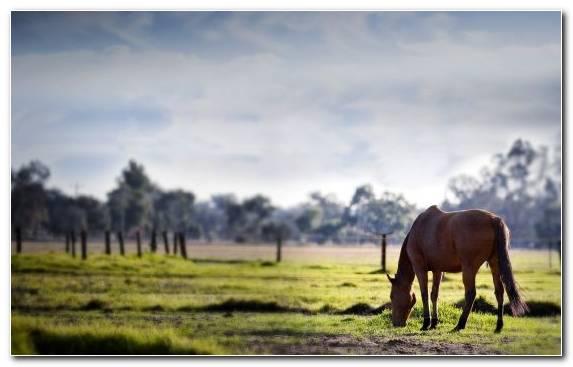 Image Mane Prairie Sky Pony Mustang