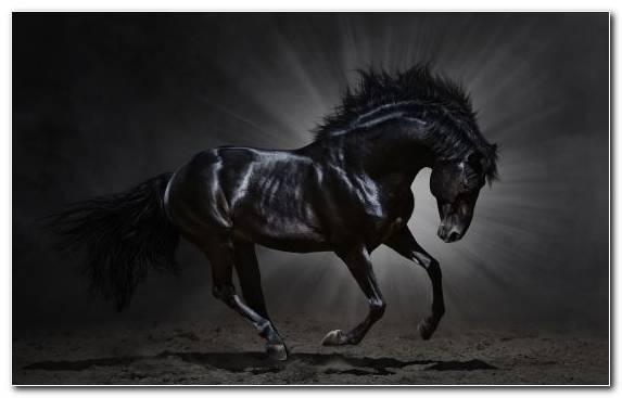 Image Mane Stallion Bridle White Mustang Horse