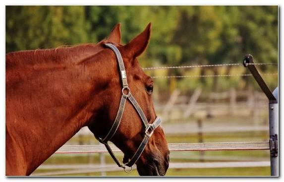 Image Mare Equestrian Stallion Halter Bridle