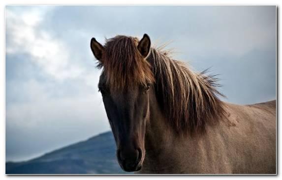 Image Mare Horses Mane Animal Ecosystem