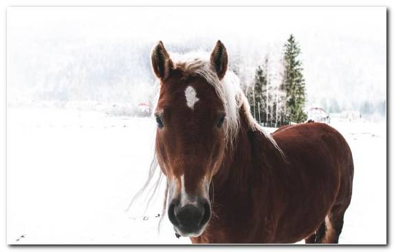 Image Mare Mane Horse Tack Mustang Horse Pack Animal