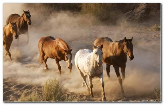 Image Mare Nature Herd Ecoregion Horse