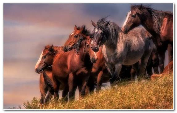 Image Mare Pasture Wildlife Herd Mane