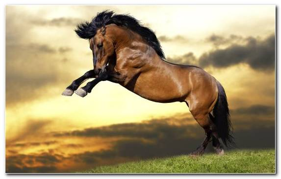 Image Mare Sky Horses Horse Mustang Horse
