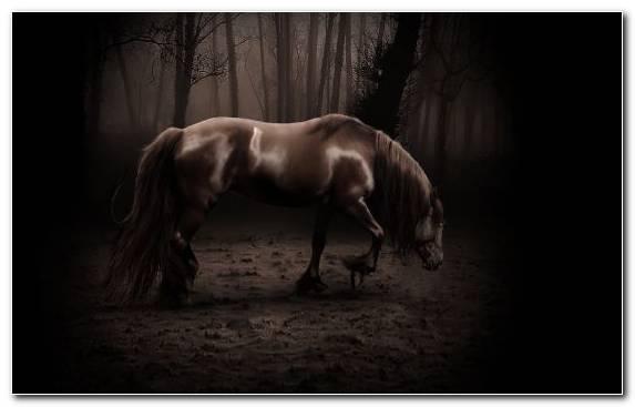Image Mare White Arabian Horse Paso Fino Horses
