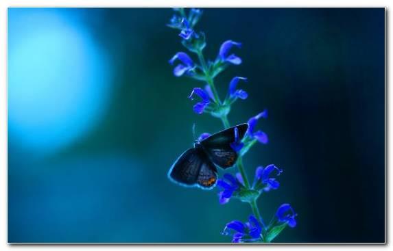 Image Marine Biology Cobalt Blue Flower Butterfly Pollinator