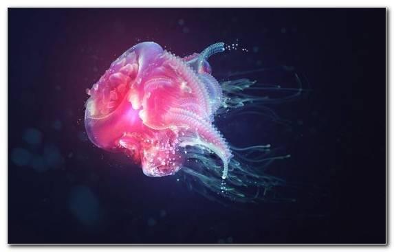 Image Marine Invertebrates Marine Biology Jellyfish Underwater Cnidaria