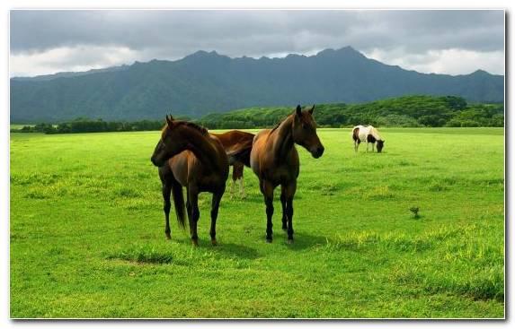 Image Meadow Ecosystem Pasture Grasses Horses