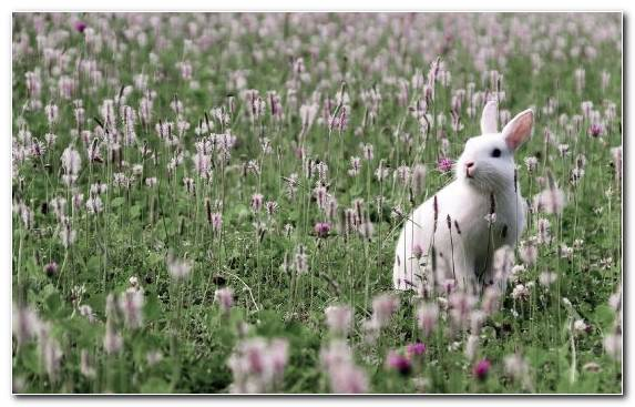 Image Meadow Wildflower Flowering Plant Rabbit Flora
