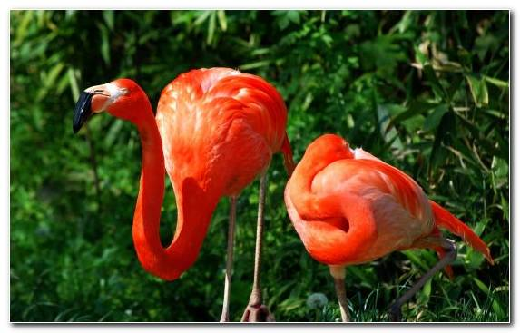 Image Medicinal Mushroom Bird Flamingo Water Bird Beak